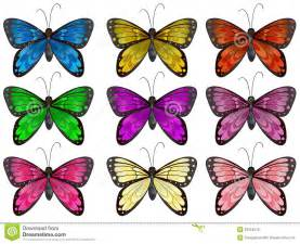 Different Color Butterflies