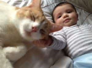 cats and newborns cats and babies tales pet dental