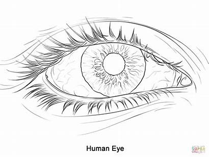 Coloring Pages Eye Human Printable Drawing Dot