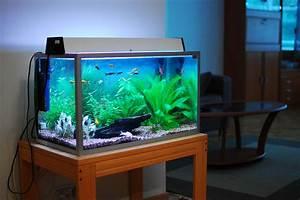 Bar Aquarium