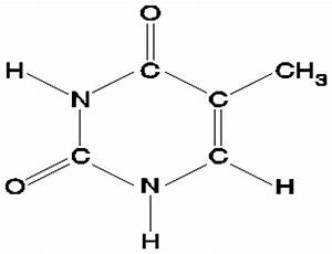 Image Gallery Thymine Structure