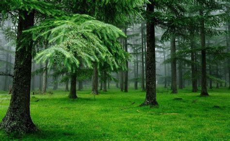 3840x2370 Forest 4k Wallpaper Pack 1080p Hd