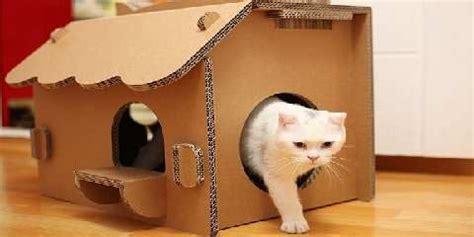 cara membuat rumah kucing dari kardus tips bikin tempat tinggal kucing menggunakan kardus