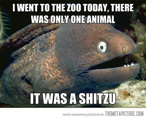 Funny Fish Memes - 17 best images about funny pictures or jokes on pinterest feelings jokes and pretty much