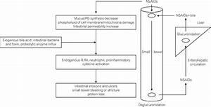 Putative Pathophysiology Of Nsaid