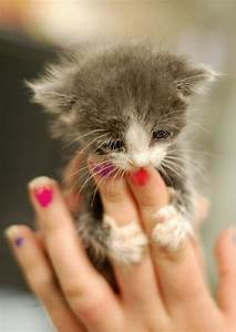 15 Really Cute Kittens | Kitty Bloger