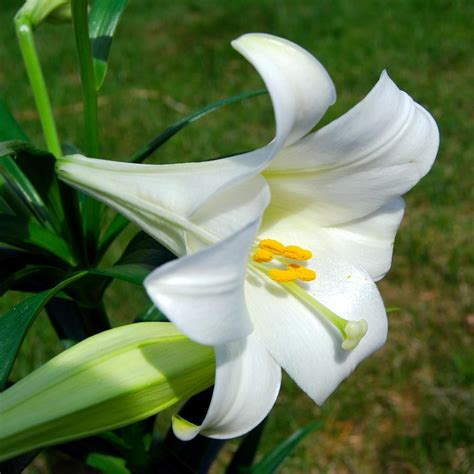 lilies pictures and names beautiful lily flowers 3 8453 the wondrous pics