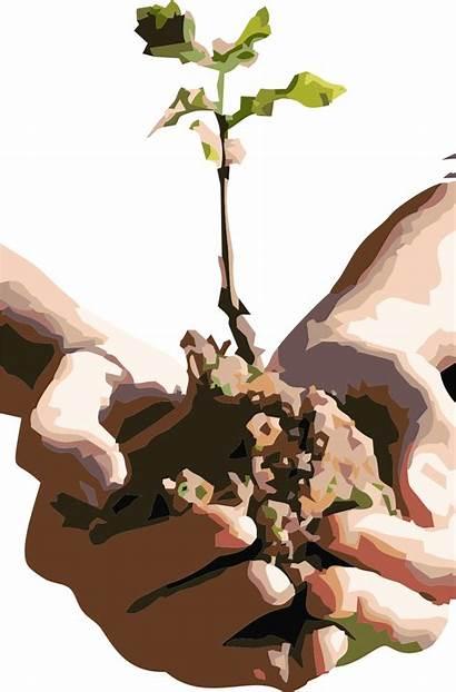 Planting Trees Seeds Marijuana Plant Cannabis Growing