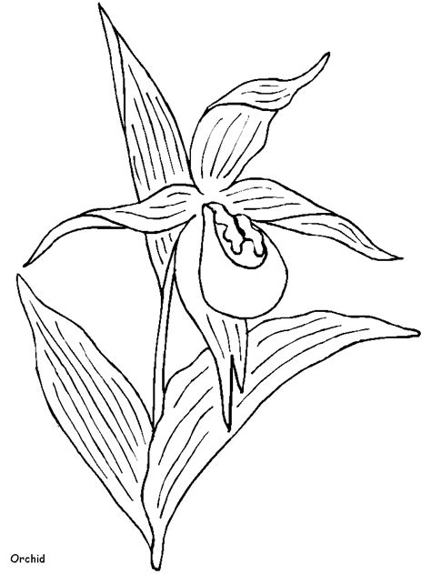 orchid flowers coloring pages coloring book