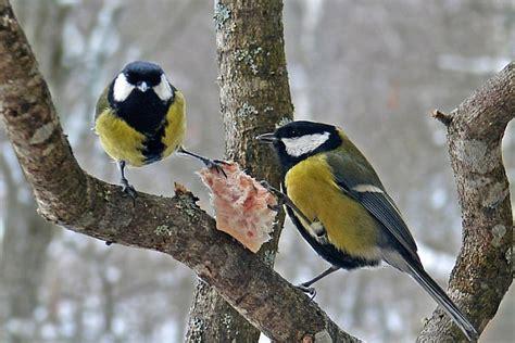 Latvijas Putni Ziemā - Foto Kolekcija