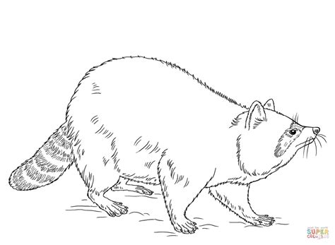 raccoon coloring page  printable coloring pages