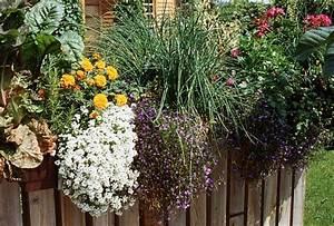 Mischkultur Im Garten : mischkultur ges ndere pflanzen im garten ~ Orissabook.com Haus und Dekorationen