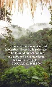 Quotes About Th... Amazon Jungle Quotes