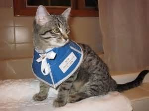 cat cone alternatives caring for your cat after surgery