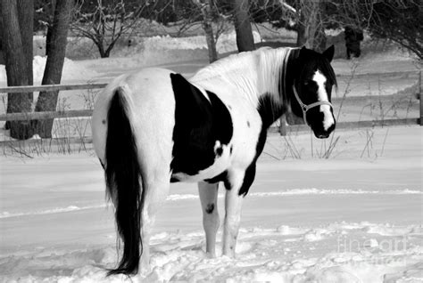 horse hespe photograph print fine 7th uploaded september which cards fineartamerica