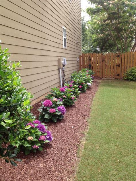 captivating hydrangea flower beds   beautify