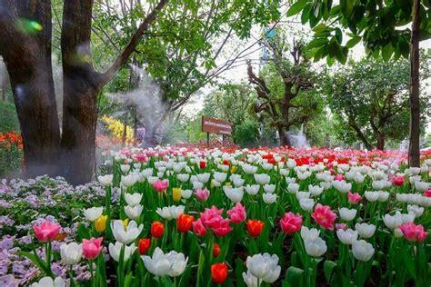 งานเชียงรายดอกไม้งาม ครั้งที่14 ณ สวนตุงและโคมนครเชียงราย