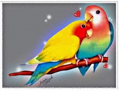 Birds Wallpapers Mobile Lovebirds Bird Animal Background