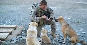 Soldier Meets 3 Stray Dogs. Watch What Happens When A Bomb ...