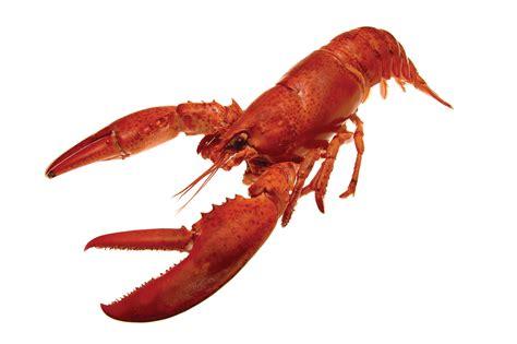 image gallery le homard