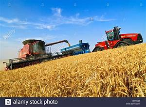 A Case Ih Combine Harvests Wheat On A Steep Hillside While