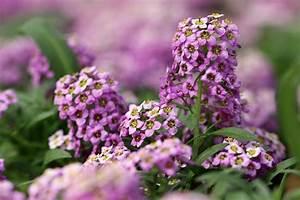 Schöne Pflanzen Für Den Garten : einj hrige pflanzen 10 sch ne stauden f r den garten ~ Michelbontemps.com Haus und Dekorationen