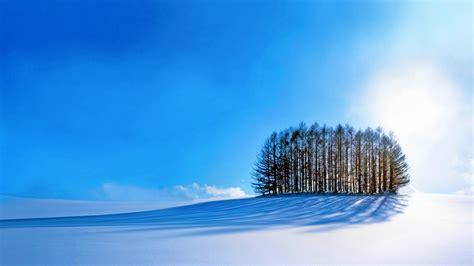wallpaper trees sky snow winter  nature