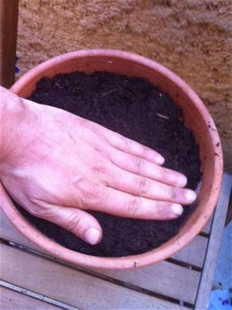 faire pousser du basilic en pot