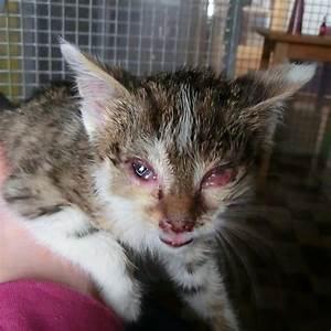 Was Brauchen Katzen : tierheim selb und umgebung katzen suchen ein neues zuhause ~ Lizthompson.info Haus und Dekorationen