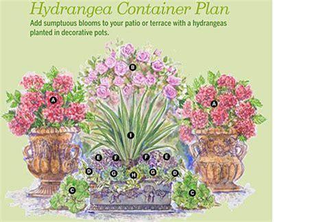 hydrangea container plan garden
