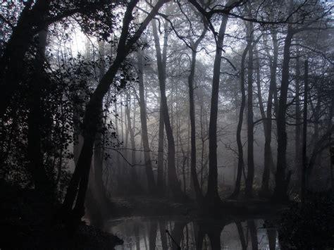 spooky forest   morning  misty morning