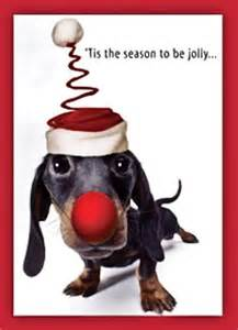 dachshund christmas christmas pinterest to be cards
