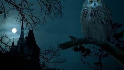 Resolution Halloween Owl Wallpapers Phone Desktop Night