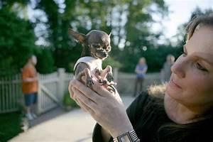 Smallest Animals in the World - VUDESK