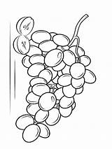 Coloring Pages Grapes Grape Fruits Printable Recommended sketch template