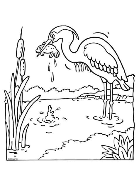 Pingwing Kleurplaat by Vijverkleurplaten Overige Vijverhulp Vraagen Jouwweb Nl