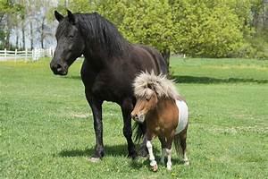 Bilder Von Pferden : hyperaktivit t bei pferden ~ Frokenaadalensverden.com Haus und Dekorationen