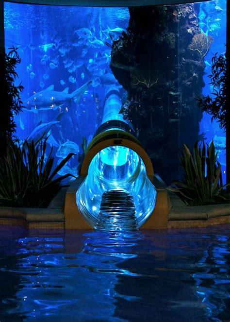images  indoor aquariums  pinterest