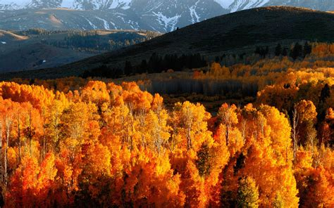 Gold Autumn Wallpapers by Wallpaper Autumn Trees Gold Mountains Light