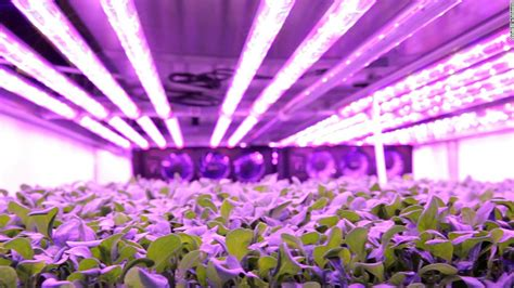 indoor farming led lights world 39 s largest indoor vertical farm to produce greens
