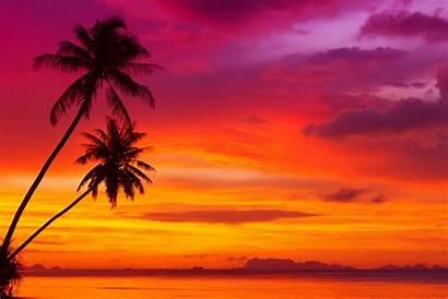 Sunset Sky Beach Scenery Tropical Trees Ocean