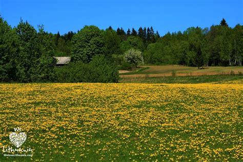 Auksinis pavasaris | We love Lithuania