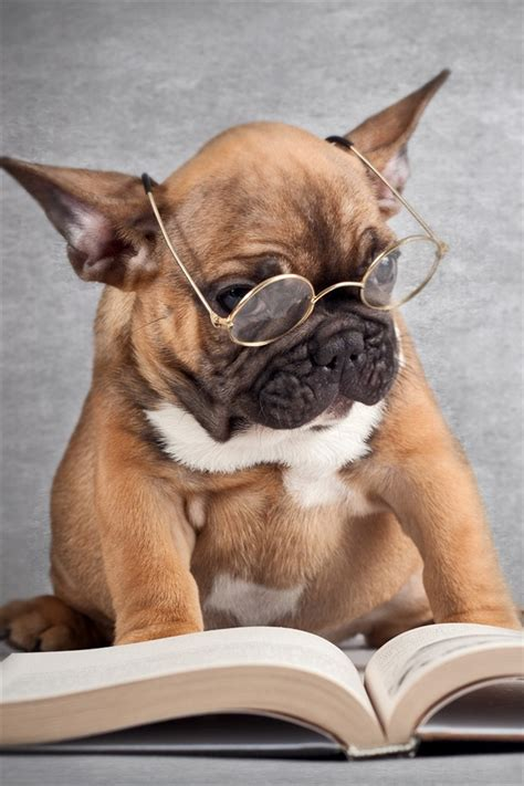 funny picture dog reading  book iphone  gs