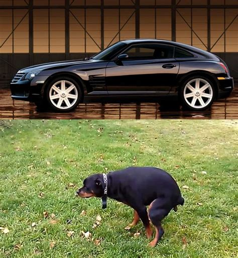 cars   uncannily  animals