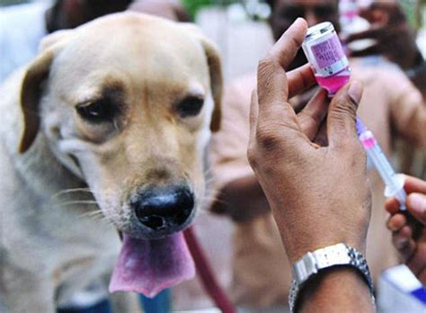 rabies vaccination  dogs    deadly virus