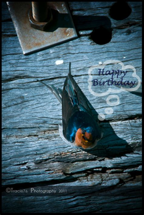 bird told   ur bday  happy birthday