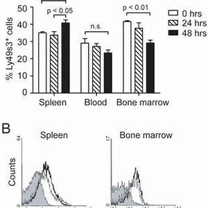 Natural killer cells separated from peripheral blood of ...
