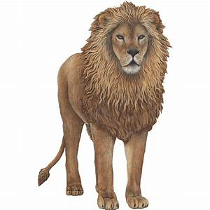 Giant Lion Wall Sticker - See how you can create Jungle ...