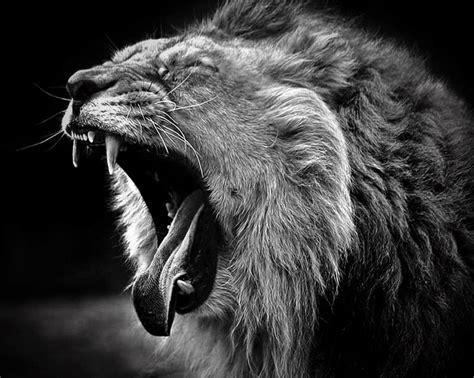 Fierce Animal Wallpapers - de 25 bedste id 233 er inden for fierce animals p 229