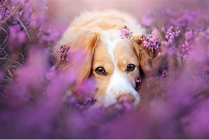 Dog Flowers Dogs Wallpapers Desktop Puppies Animals